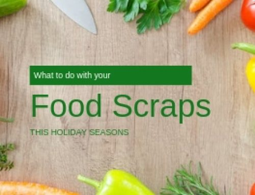 What To Do With Your Food Scraps This Holiday Season